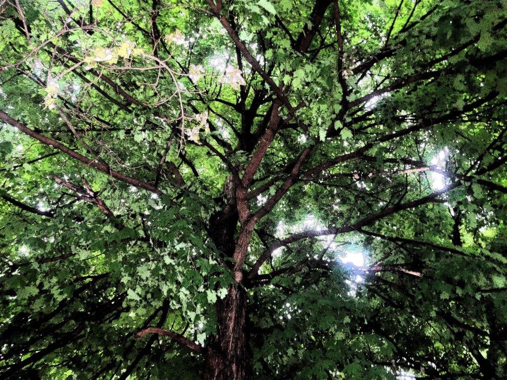 wettree