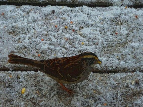 2014-02-04 bird2