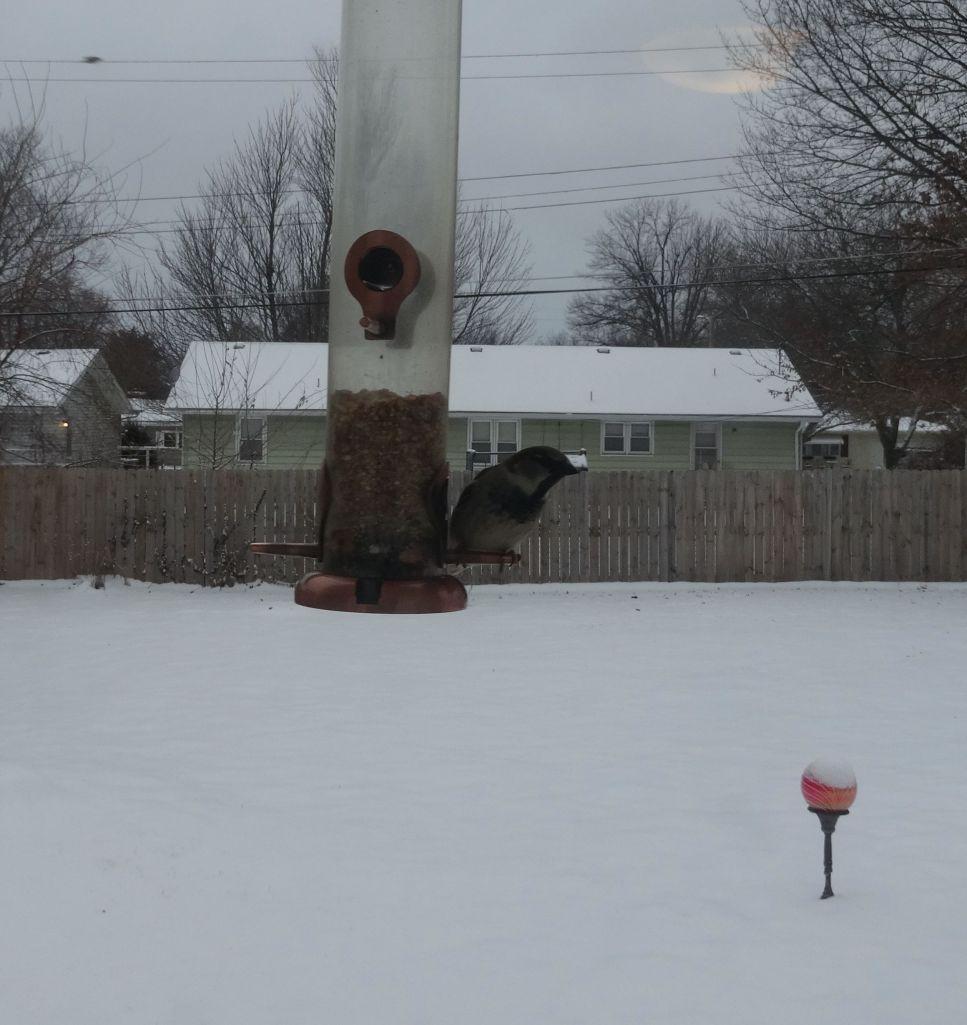 2014-02-04 bird