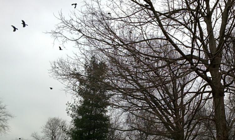2014-03-19 birdsclose