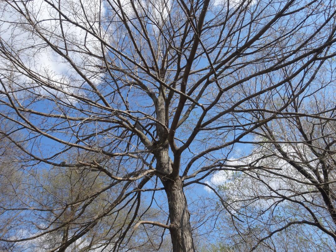 2014-04-18 treesky