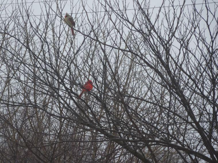 2014-03-02 cardinals
